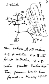 Darwin tree